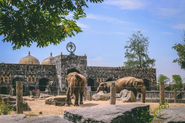 olifant pairi daiza